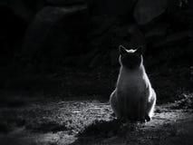 Zonsondergang meditation stock afbeeldingen