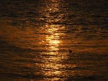 Zonsondergang met bezinning van de zon stock fotografie