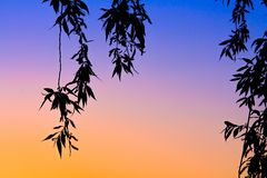 Zonsondergang met bladeren en de kruising van kleuren royalty-vrije stock foto's