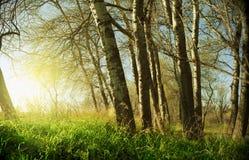 Zonsondergang met bomen Stock Foto's