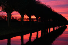 Zonsondergang met bomen Royalty-vrije Stock Afbeelding