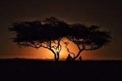 Zonsondergang met boom en begroeting stock afbeeldingen
