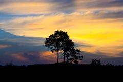 Zonsondergang met boom vooraan Royalty-vrije Stock Afbeelding
