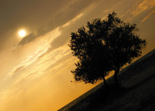 Zonsondergang met boomsilhouet Stock Foto's