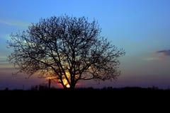 Zonsondergang met een boom Stock Afbeelding