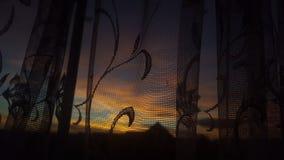 Zonsondergang met een verschil stock fotografie