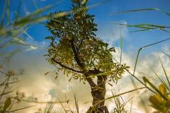 Zonsondergang met eenzame boom Stock Foto's