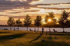 Zonsondergang met ganzen en zeemeeuwen Royalty-vrije Stock Foto's