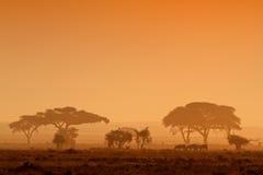 Zonsondergang met Gesilhouetteerde bomen Stock Foto