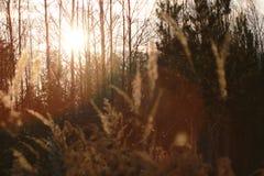 Zonsondergang met gras en bos Stock Foto's