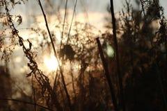 Zonsondergang met gras en bos Royalty-vrije Stock Foto's