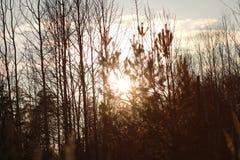 Zonsondergang met gras en bos Stock Fotografie