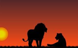 Zonsondergang met leeuw en leeuwin Royalty-vrije Stock Foto