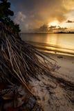 Zonsondergang met oceaan en palmwortels Royalty-vrije Stock Foto's
