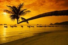 Zonsondergang met palm en boten op tropisch strand Royalty-vrije Stock Afbeelding