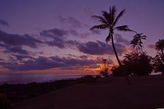Zonsondergang met palmen bij het strand Stock Afbeelding