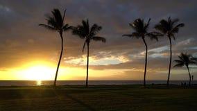 Zonsondergang met Palmen in Hawaï stock video
