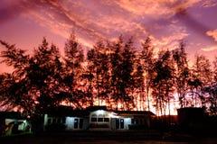 Zonsondergang met Pijnboom stock afbeeldingen