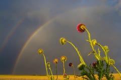 Zonsondergang met regenboog La-Pampa Stock Foto