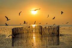 Zonsondergang met silhoutte van vogels het vliegen royalty-vrije stock foto's