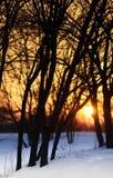 Zonsondergang met sneeuw Stock Afbeeldingen