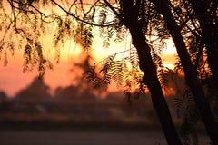 Zonsondergang met takken Stock Afbeelding