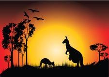 Zonsondergang met twee kangoeroes Stock Fotografie
