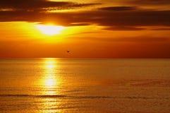 Zonsondergang met vogel Stock Foto's