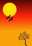 Zonsondergang met vogels Stock Afbeeldingen
