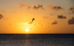 Zonsondergang met vogels het vliegen Stock Afbeelding