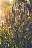 Zonsondergang met warme toon voorbij bloemen Stock Afbeelding