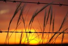 Zonsondergang met weerhaken royalty-vrije stock fotografie