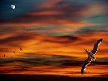 Zonsondergang met zeemeeuwen stock foto