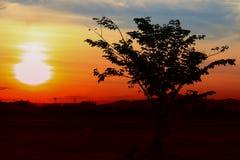 Zonsondergang mooi kleurrijk landschap in de blauwe tijd van de de aardschemering van de hemelavond en silhouetboom Stock Afbeeldingen