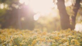 Zonsondergang, mooie bloemen, Royalty-vrije Stock Foto's