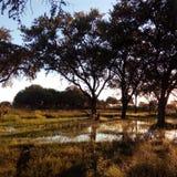 Zonsondergang in Motswiri, Khwai, Botswana royalty-vrije stock fotografie