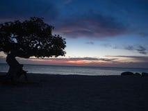 Zonsondergang onder boom op Eagle-strand, Aruba royalty-vrije stock fotografie