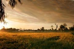 Zonsondergang onder fileds Stock Afbeelding