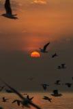 Zonsondergang op Bangpu-Recreatiecentrum Stock Foto's