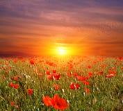 Zonsondergang op bloemenweide Stock Fotografie
