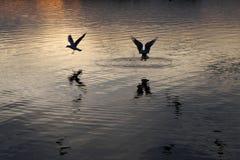 Zonsondergang op de stadsvijver royalty-vrije stock foto