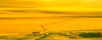 Zonsondergang op de Weide Stock Foto