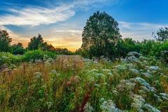 Zonsondergang op de zomergebied royalty-vrije stock afbeelding