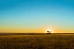 Zonsondergang op een groene weide met een boom Stock Foto