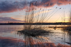 Zonsondergang op een meer Oude rietbezinning in water stock afbeelding
