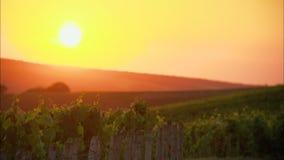 Zonsondergang op een wijngaard in Frankrijk stock videobeelden