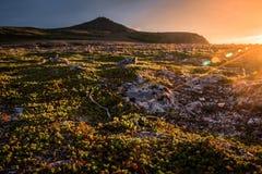 Zonsondergang op het bergplateau, met zongloed en gouden tonen in toendravegetatie Stock Afbeelding