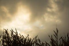 Zonsondergang op het gras Royalty-vrije Stock Foto's