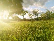 Zonsondergang op het gras royalty-vrije stock afbeeldingen