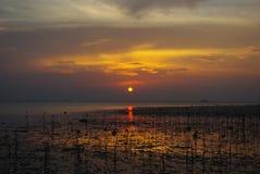 Zonsondergang op het moeras Stock Foto's